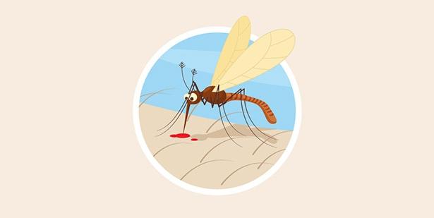Mosquito-tigre-Chikungunya-chikunguña
