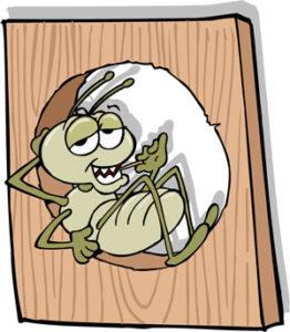 Prevencion contra termitas y trucos sencillos para eliminarlas