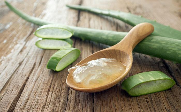 Remedios Caseros para picaduras de mosquito tigre, el Aloe Vera es uno de los mas eficaces remedios caseros contra las picaduras del mosquito tigre