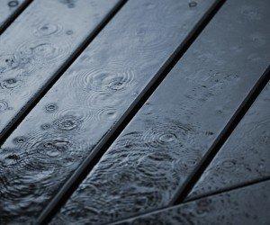 carcoma-de-la-madera-invierno.jpg