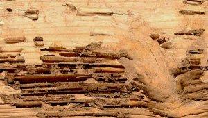 galerias termita